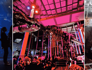 NightLife at the California Academy of Sciences