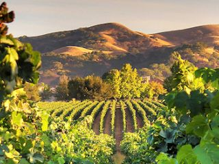 Live like a local in the beautiful Tri-Valley, with its abundant charm and sunshine