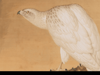 White Falcon (detail), by Lang Shining (Giuseppe Castiglione, Italian, 1688–1766)