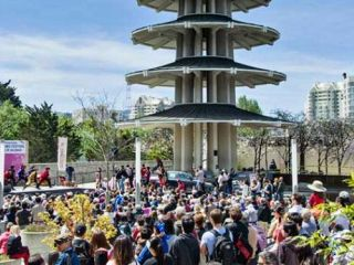 Experience the annual Northern California Cherry Blossom Festival in San Francisco's historic Japantown.