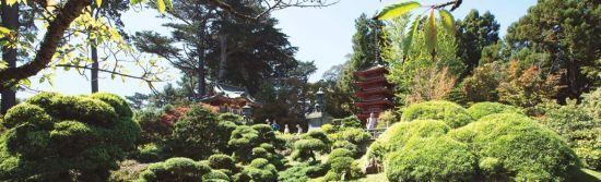 From its history to tips on when best to visit, here's our guide to everything you need to know about the Japanese Tea Garden.