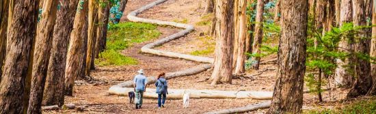 See how world-renowned artist Andy Goldsworthy uses the natural beauty and environment of the Presidio to showcase his four incredible art installations.