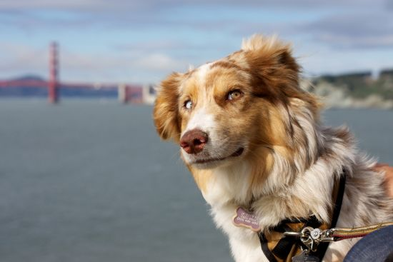 Dog by the Bay